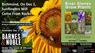 Richmond Dec 1-2 Events - Sunflowers